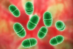 К какой группе бактерий относится Streptococcus faecalis