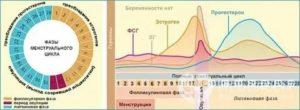 17 ОН прогестерон повышен в лютеиновую фазу