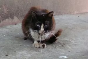 Поцарапал домашний кот и теперь боюсь бешенства
