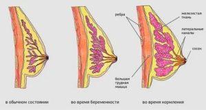 Ушиб груди во время беременности