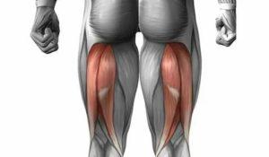 Отрыв сухожилия длинной головки двуглавой мышцы бедра от седалищного бугра