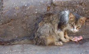 Поцарапал бездомный котёнок