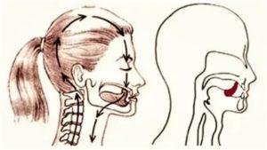 Положение языка во рту