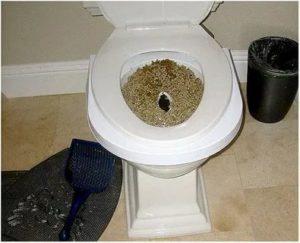 Сразу после ПА было больно ходить в туалет