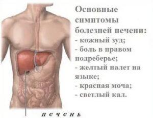 Боли в печени и низкая температура