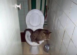 Редко хожу в туалет по-большому