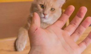 Ребенка поцарапал кот