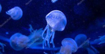 Перед левым глазом плавают медузы, бабочки и тд