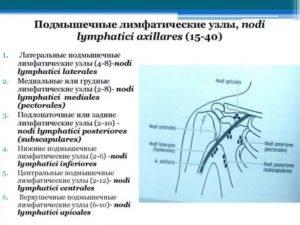Подмышечные лимфатические узлы